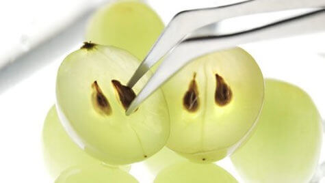 Wat betekent druivenpitolie voor onze gezondheid?
