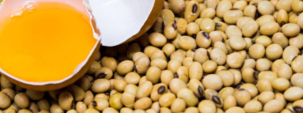 Tekort aan eiwitten slecht voor onze gezondheid en gewicht?