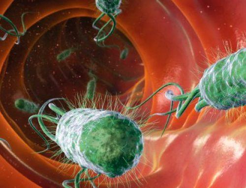 Darmflora herstellen voor een betere gezondheid en makkelijker afvallen